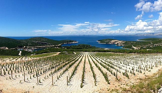 Wine-tasting-charter-Hvar