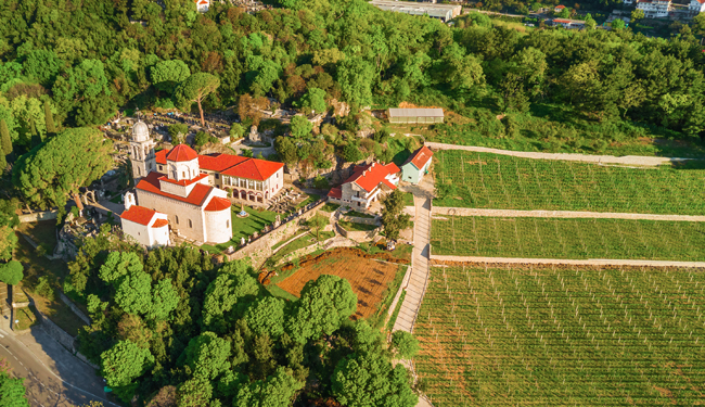 Savina vineyard